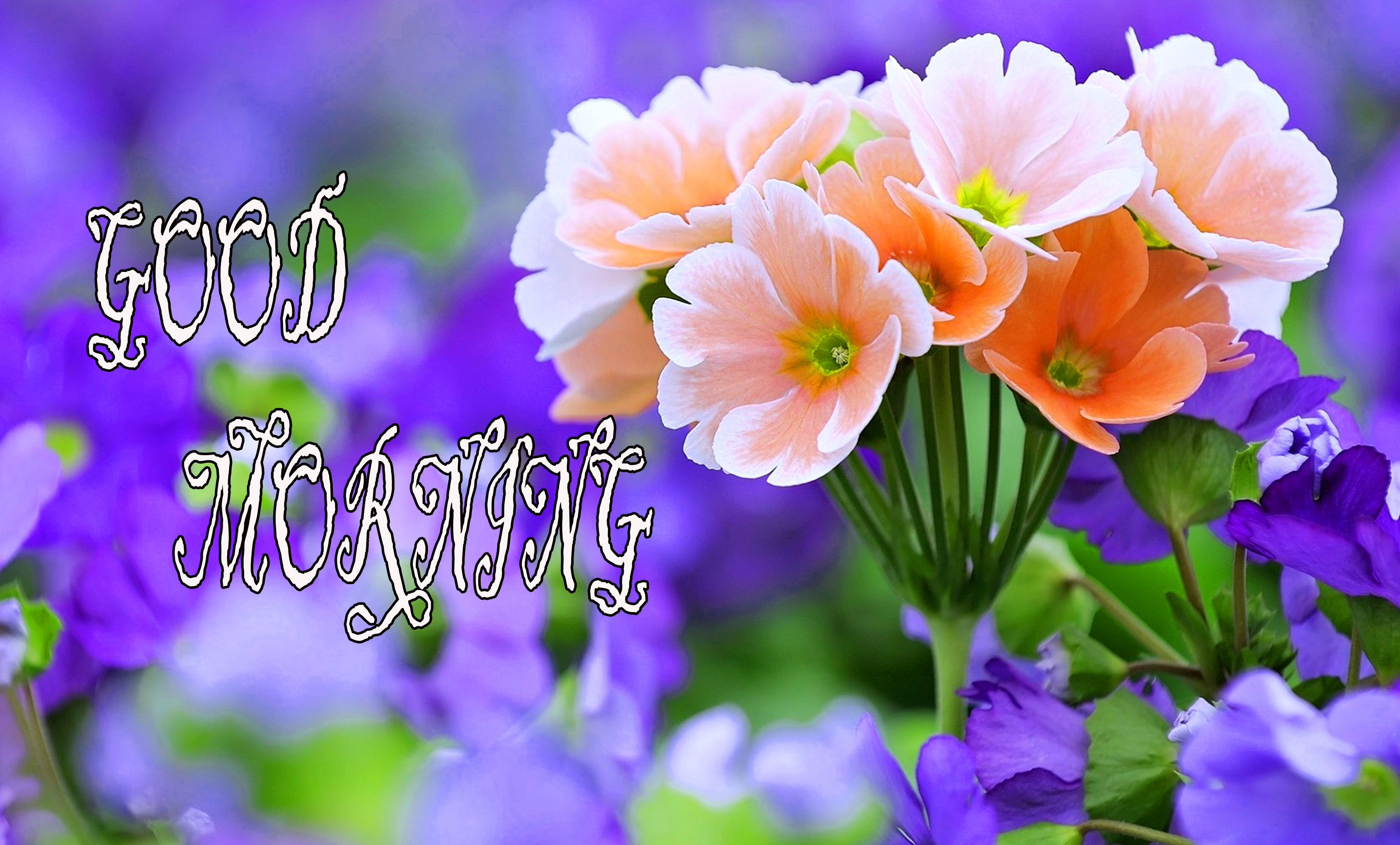 GOOD MORNING IMAGE WITH BEAUTIFUL FLOWERS NATURE PHOTO FOR FACEBOOK