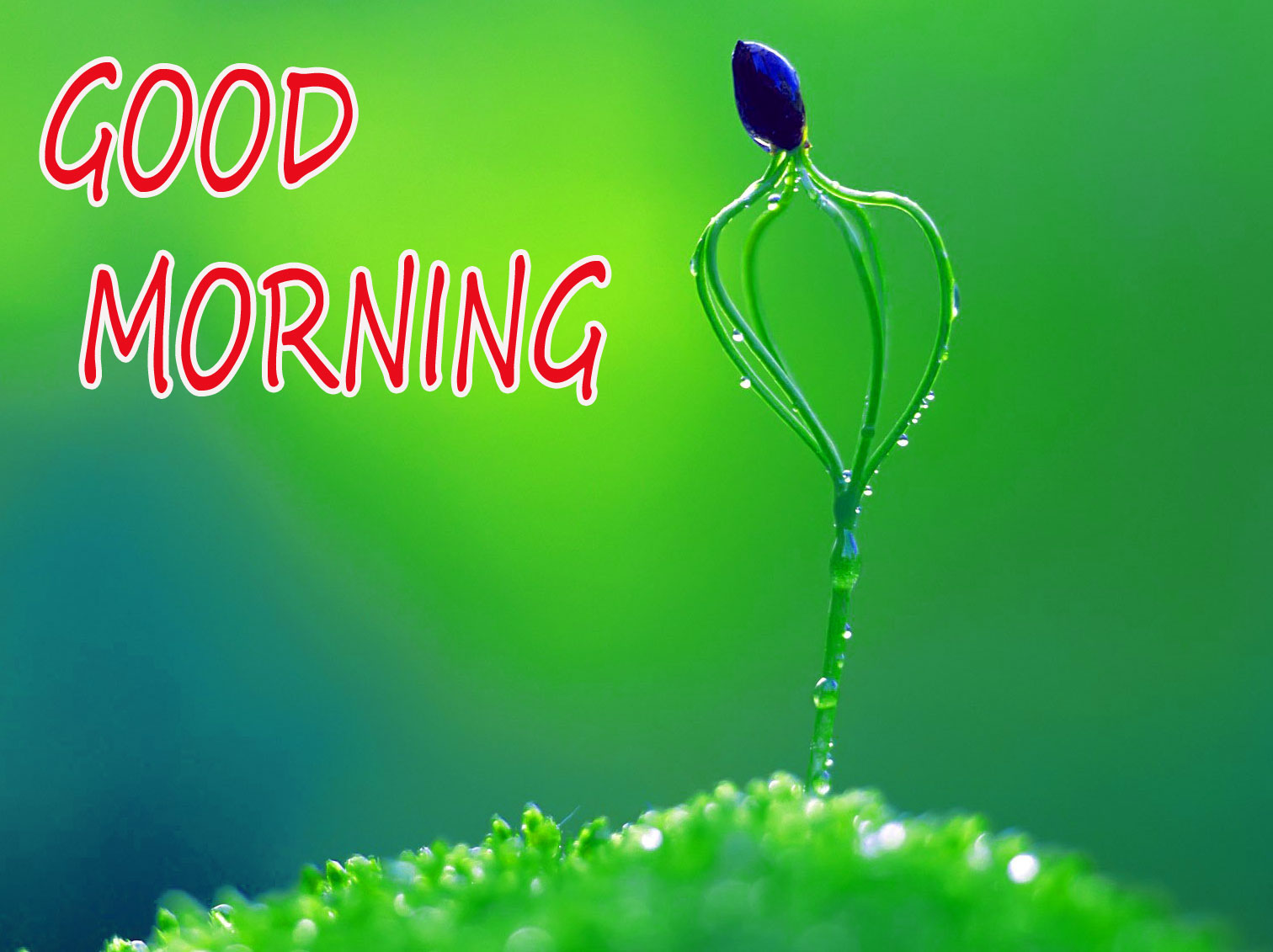 GOOD MORNING IMAGE WITH BEAUTIFUL FLOWERS NATURE WALLPAPER FOR FACEBOOK