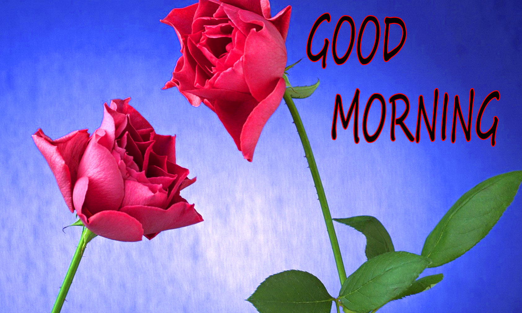 GOOD MORNING IMAGE WITH BEAUTIFUL FLOWERS NATURE WALLPAPER PICS