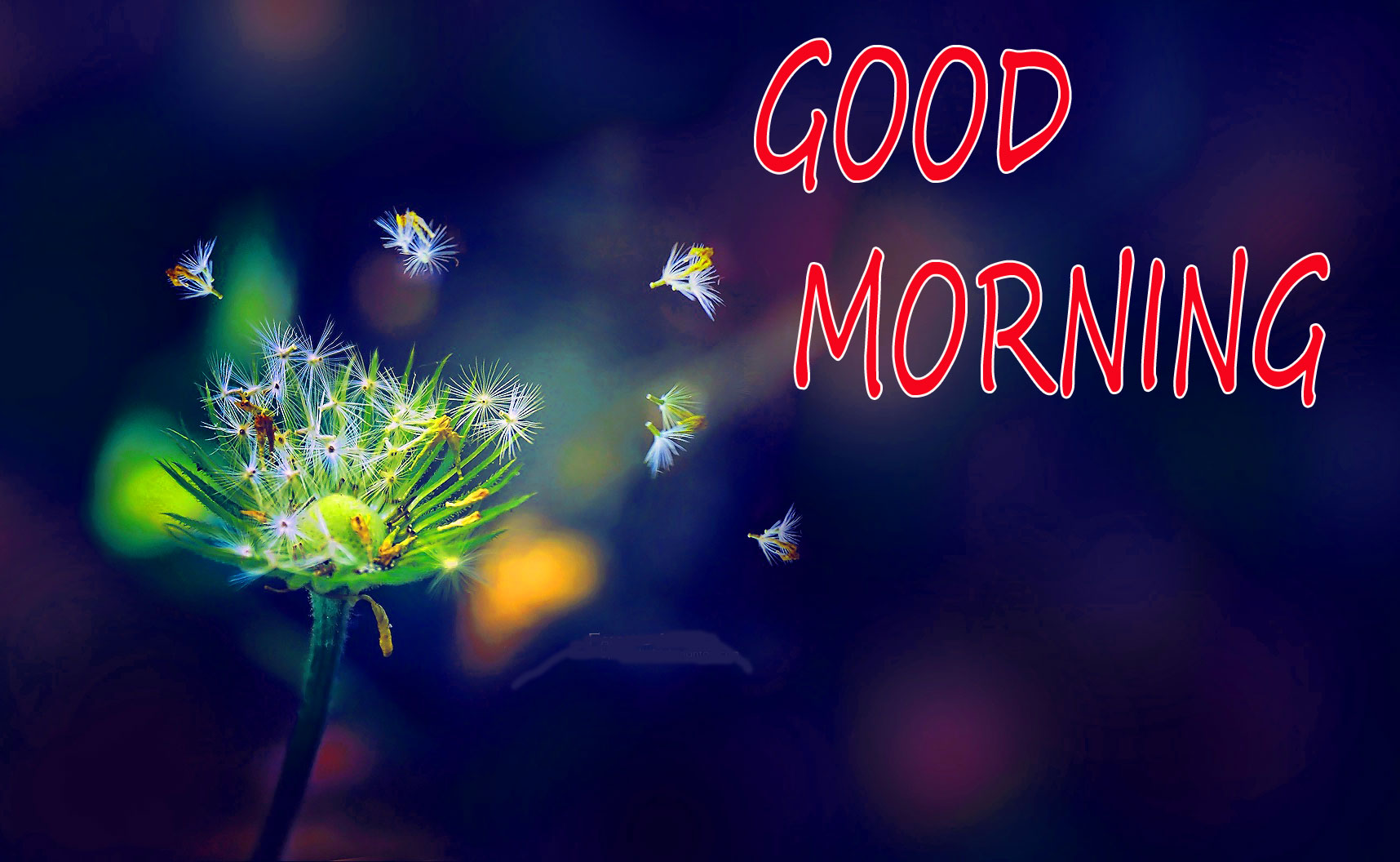 GOOD MORNING IMAGE WITH BEAUTIFUL FLOWERS NATURE WALLPAPER PHOTO PICTURES HD FREE