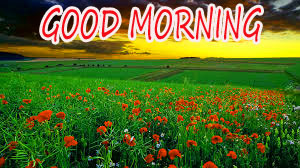 GOOD MORNING IMAGE WITH BEAUTIFUL FLOWERS NATURE PICS PICTURES FREE FOR FACEBOOK