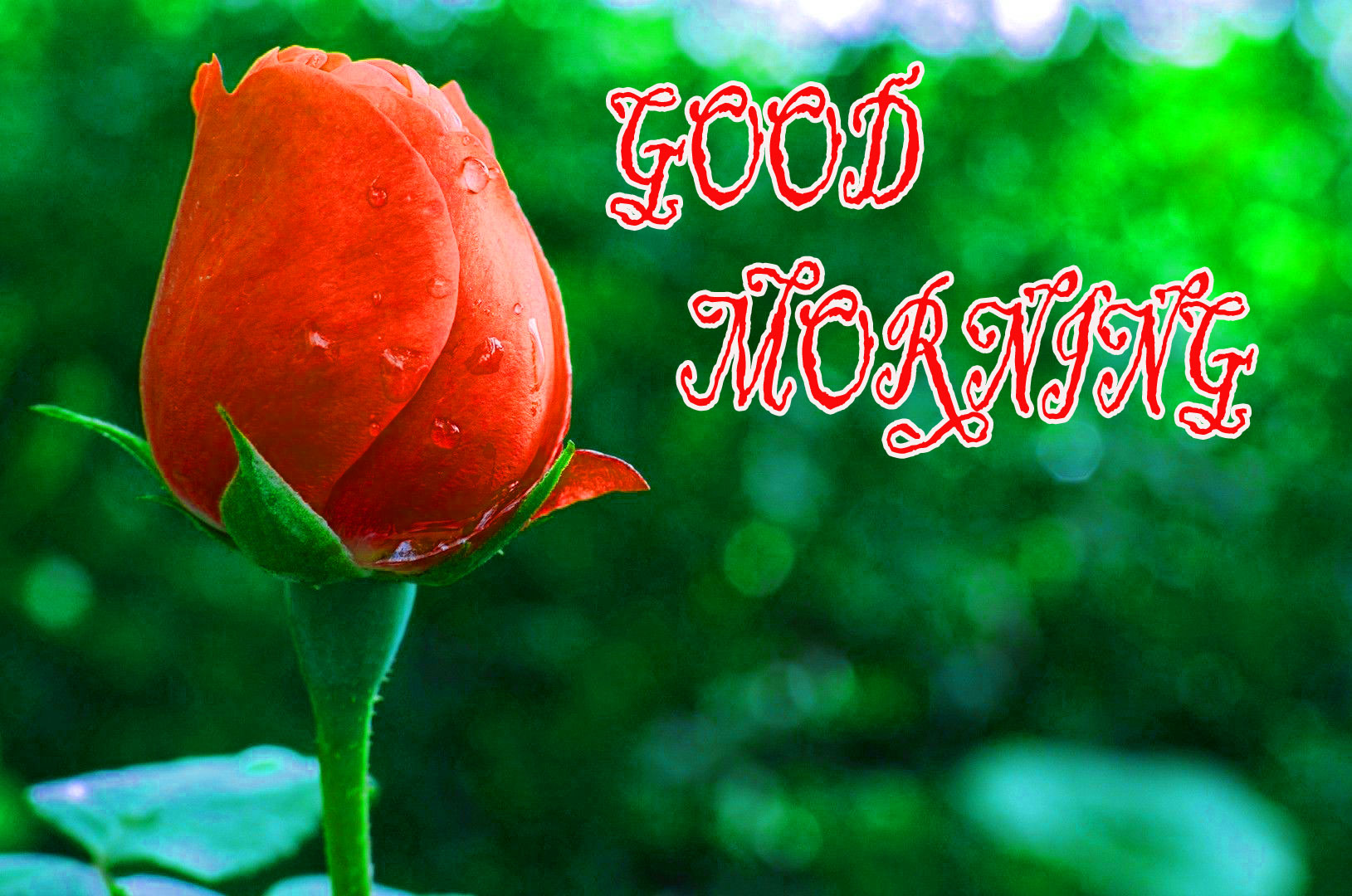 GOOD MORNING IMAGE WITH BEAUTIFUL FLOWERS NATURE WALLPAPER PICTURES FREE FOR WHATSAPP