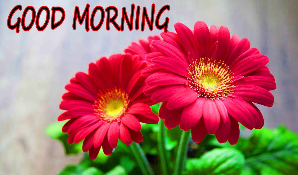 GOOD MORNING IMAGE WITH BEAUTIFUL FLOWERS NATURE PHOTO DOWNLAOD & SHARE WITH FRIEND