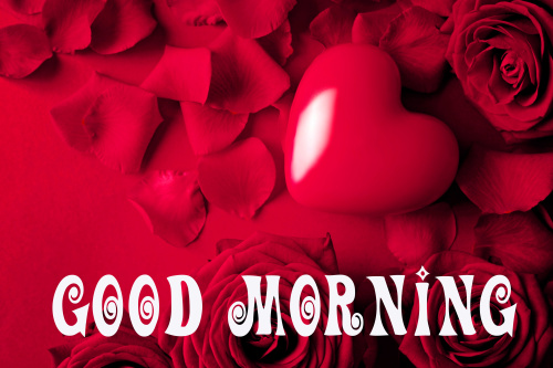 Romantic good Morning Images Pics With Red Rose