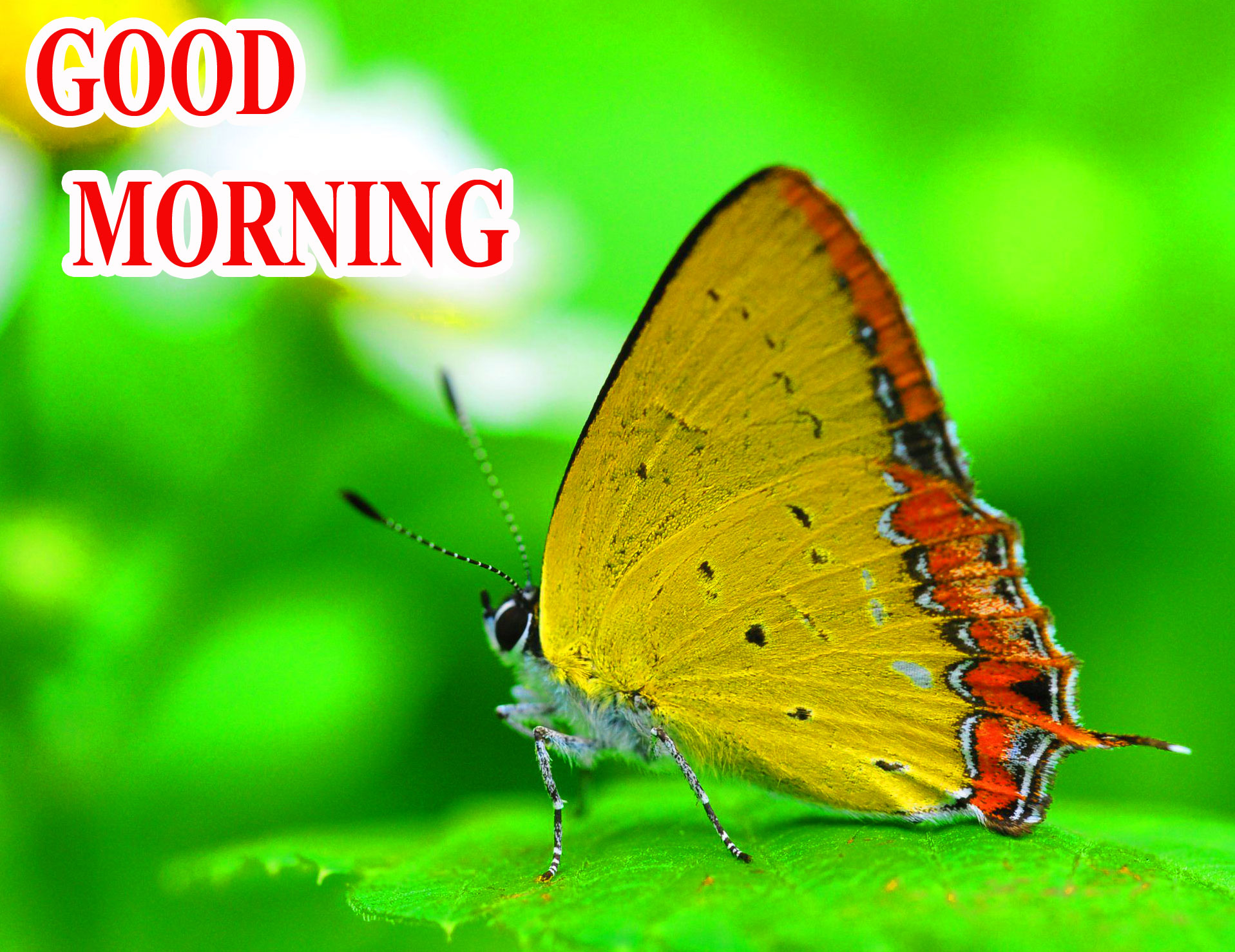 BEAUTIFUL LATEST AMAZING ALL GOOD MORNING IMAGES PHOTO FOR FACEBOOK