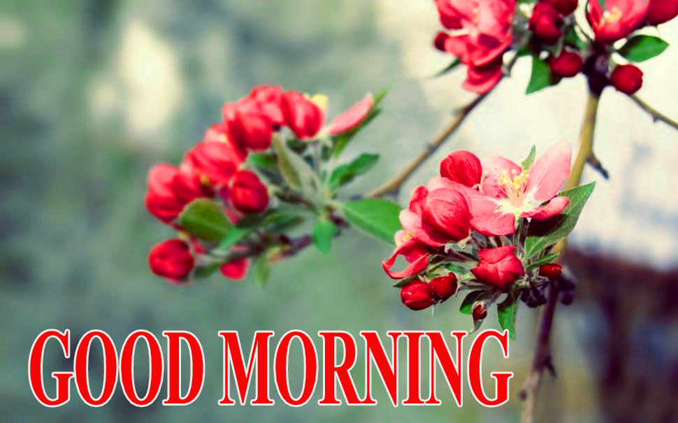 BEAUTIFUL LATEST AMAZING ALL GOOD MORNING IMAGES WALLPAPER PICS FOR WHATSAPP