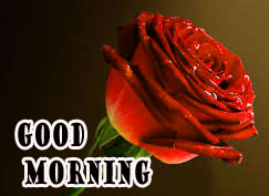 GOOD MORNING IMAGE WITH BEAUTIFUL FLOWERS NATURE PICS PHOTO FREE DOWNLOAD