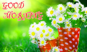 GOOD MORNING IMAGE WITH BEAUTIFUL FLOWERS NATURE WALLPAPER PICS FOR WHATSAPP