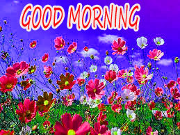 GOOD MORNING IMAGE WITH BEAUTIFUL FLOWERS NATURE PICS PHOTO DOWNLOAD