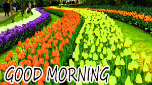 GOOD MORNING IMAGE WITH BEAUTIFUL FLOWERS NATURE PIC WALLPAPER FOR WHATSAPP