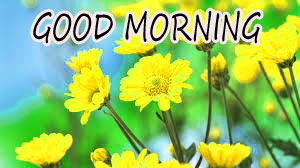 GOOD MORNING IMAGE WITH BEAUTIFUL FLOWERS NATURE WALLPAPER PICS FREE FOR FACEBOOK
