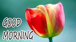 GOOD MORNING IMAGE WITH BEAUTIFUL FLOWERS NATURE PHOTO WALLPAPER PICS