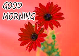 GOOD MORNING IMAGE WITH BEAUTIFUL FLOWERS NATURE WALLPAPER PICTURES FREE DOWNLOAD