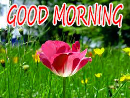 GOOD MORNING IMAGE WITH BEAUTIFUL FLOWERS NATURE WALLPAPER PICS FOR FACEBOOK