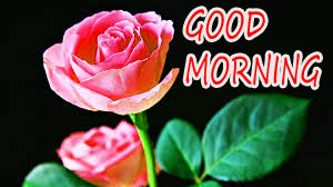 GOOD MORNING IMAGE WITH BEAUTIFUL FLOWERS NATURE PICS HD WITH RED ROSE
