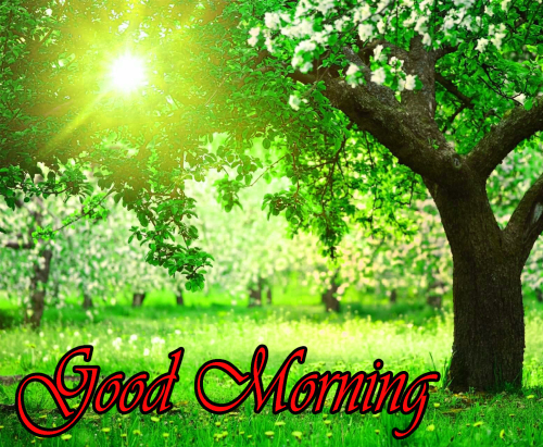 NATURE GOOD MORNING PICS IMAGES WALLPAPER PICTURES HD