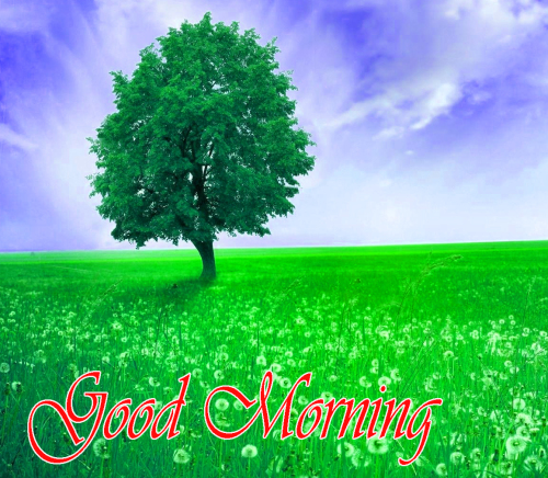 NATURE GOOD MORNING PICS IMAGES PHOTO FOR WHATS APP