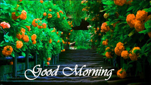 NATURE GOOD MORNING PICS IMAGES PICTURES FOR WHATSAPP