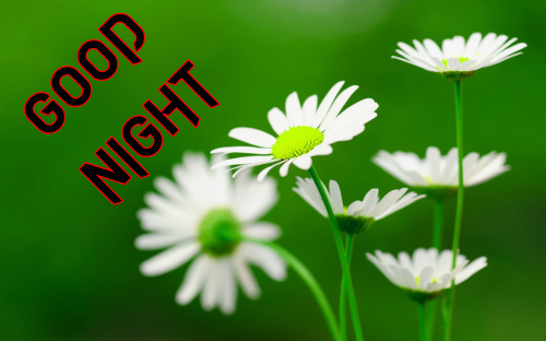 BEAUTIFUL FLOWER ROMANTIC GOOD NIGHT IMAGE PICTURES PHOTO DOWNLOAD
