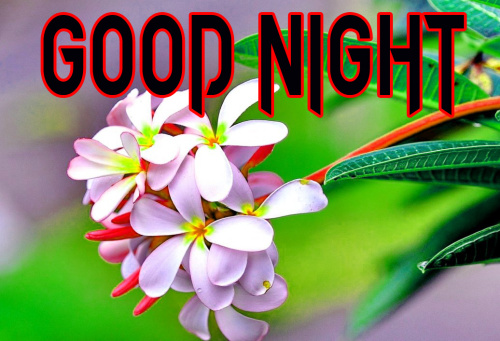 BEAUTIFUL FLOWER ROMANTIC GOOD NIGHT IMAGE PICTURES PHOTO HD