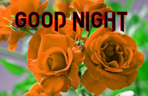 BEAUTIFUL FLOWER ROMANTIC GOOD NIGHT IMAGES PICTURES PICS FOR FACEBOOK