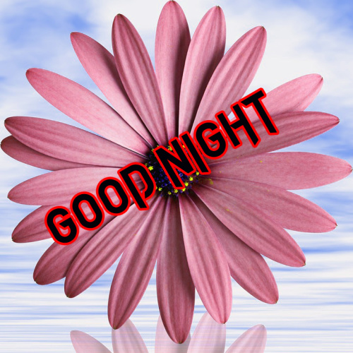 BEAUTIFUL FLOWER ROMANTIC GOOD NIGHT IMAGES PICTURES PHOTO HD