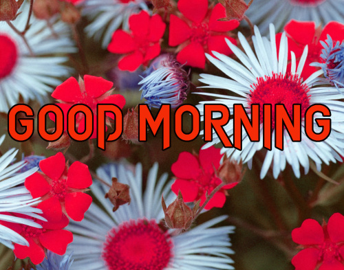 FRESH SWEET GOOD MORNING IMAGES PICTURES PHOTO HD