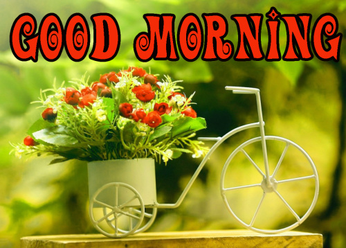 FRESH SWEET GOOD MORNING IMAGES PICTURES PICS HD