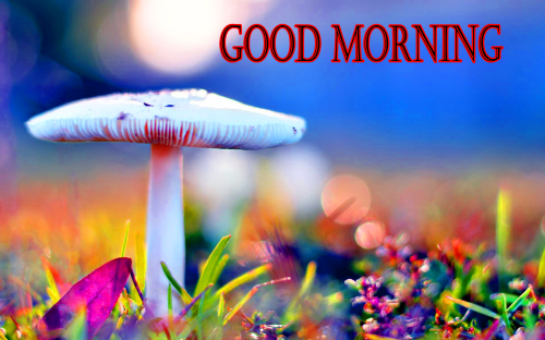 GOOD MORNING SISTER IMAGES PICTURE FOR FACEBOOK
