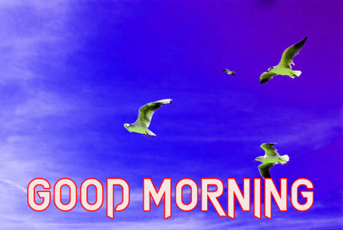 GOOD MORNING SISTER IMAGES PHOTO PICS DOWNLOAD