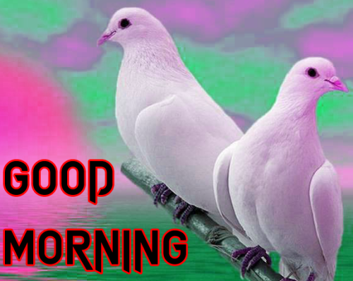 GOOD MORNING SISTER IMAGES WALLPAPER DOWNLOAD