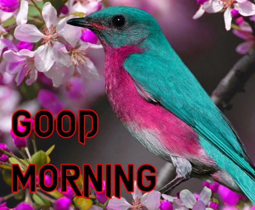 GOOD MORNING DESIGN IMAGES PHOTO PICS FOR WHATSAPP
