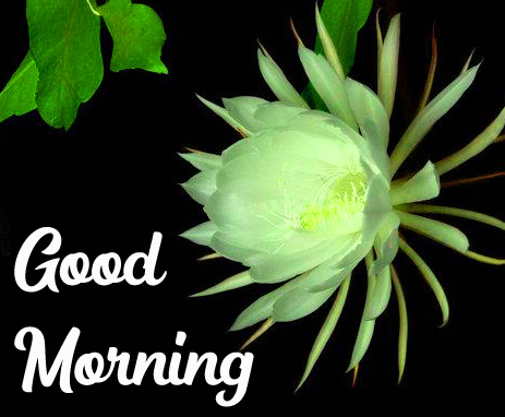 GOOD MORNING HD IMAGES PICS WALLPAPER HD