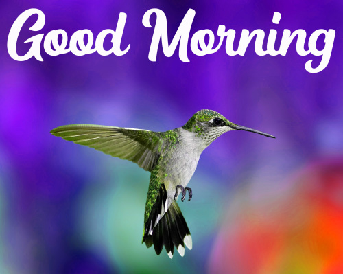 GOOD MORNING HD IMAGES PICTURES WALLPAPER FREE DOWNLOAD