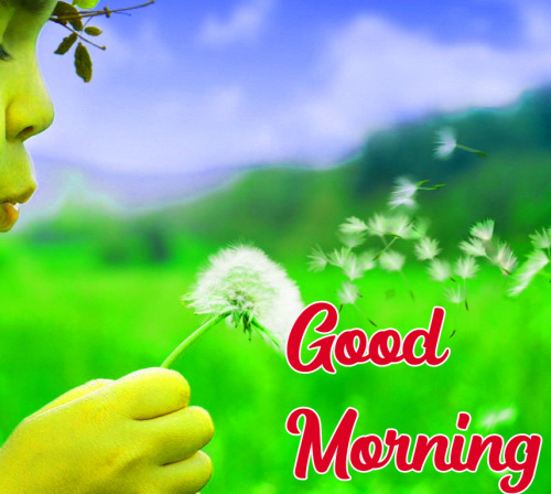 GOOD MORNING HD IMAGES PHOTO PICS FREE HD