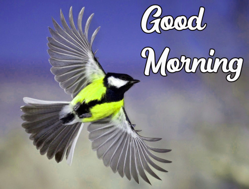 GOOD MORNING HD IMAGES PHOTO PICS FREE DOWNLOAD
