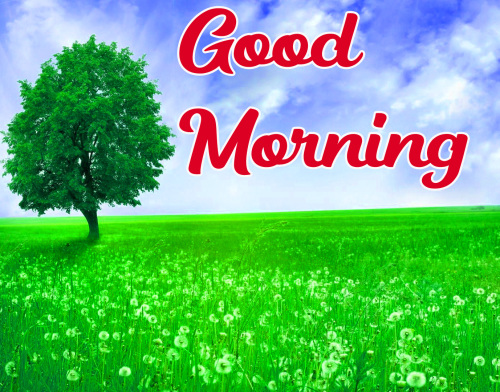 GOOD MORNING HD IMAGES WALLPAPER PHOTO HD