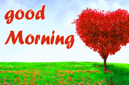 GOOD MORNING HD IMAGES WALLPAPER PHOTO FOR WHATSAPP