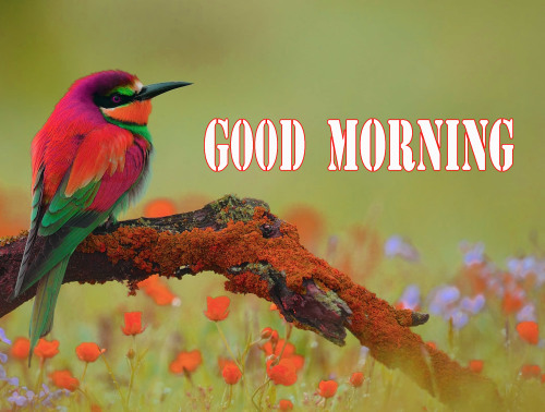 GOOD MORNING HD IMAGES PHOTO WALLPAPER FREE HD DOWNLOAD