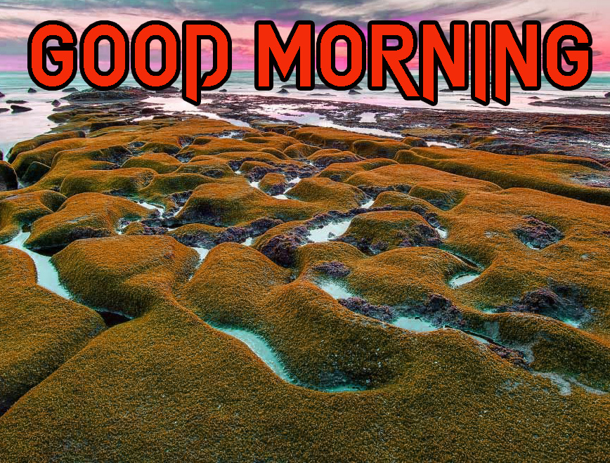 GOOD MORNING IMAGE WALLPAPER PICTURES PHOTO HD DOWNLOAD