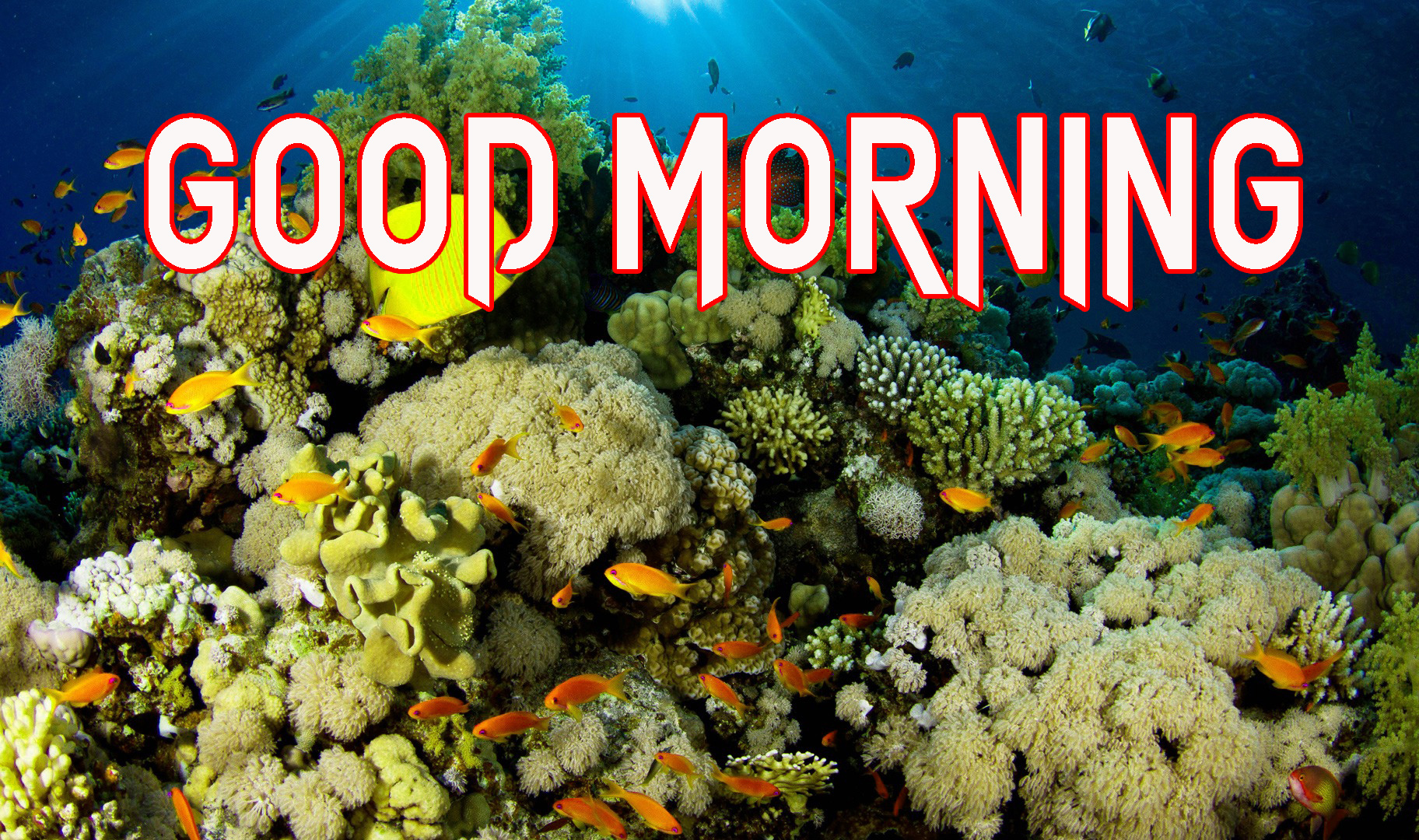 GOOD MORNING IMAGE PICTURES WALLPAPER PICS FOR WHATSAPP