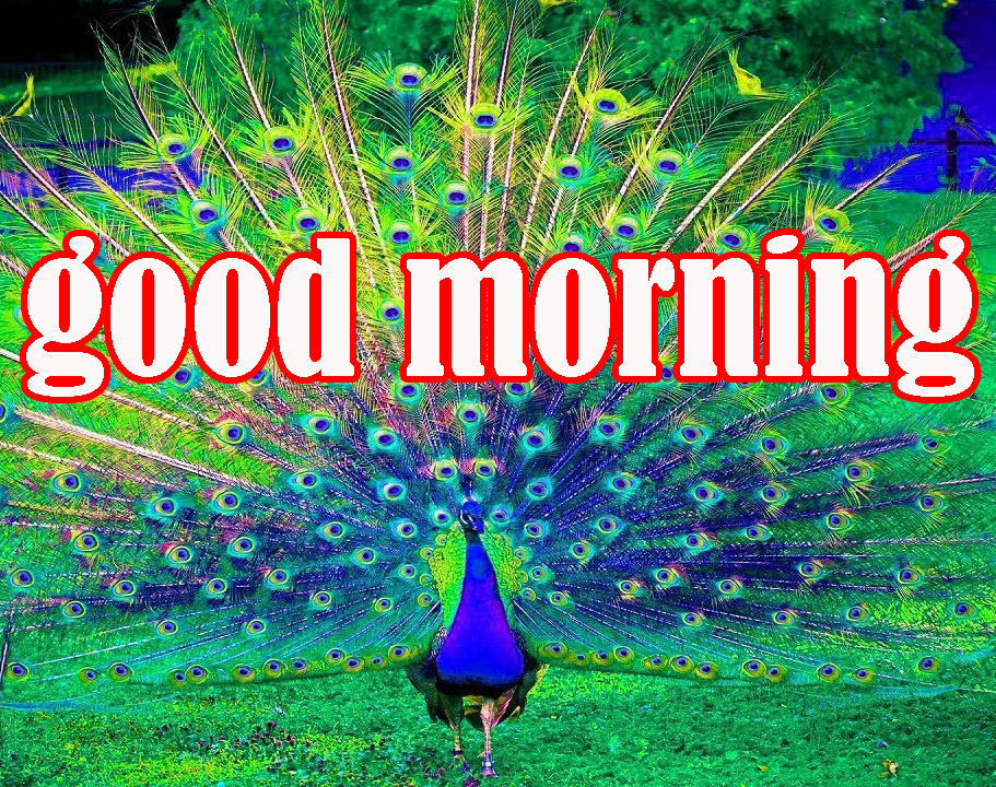 GOOD MORNING IMAGE PICTURES PHOTO DOWNLOAD
