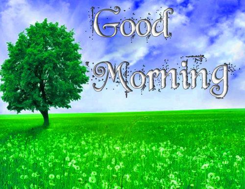 GOOD MORNING IMAGES PHOTO WALLPAPER HD DOWNLOAD