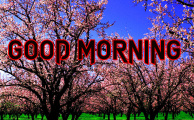 55 Good Morning Images For My Dear Friend Pics Wallpaper