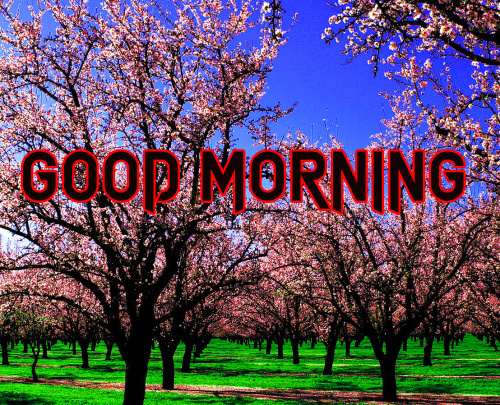 Good Morning Images For My Dear Friend (1)
