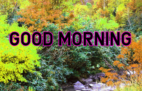 Good Morning Images For My Dear Friend (5)