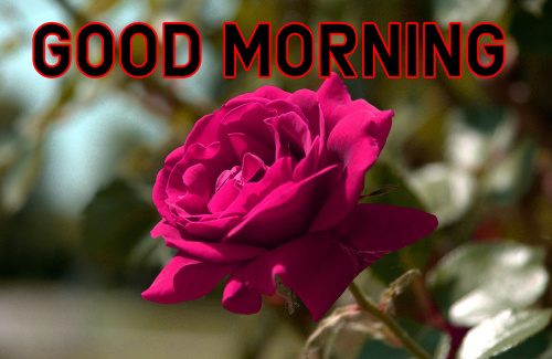 Good Morning Images For My Dear Friend (86)
