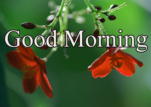 GOOD MORNING IMAGES WITH TEACHERS DAY WALLPAPER PICS FREE HD
