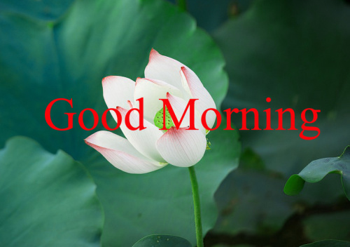 GOOD MORNING IMAGES WITH TEACHERS DAY PICS PICTURES FREE HD DOWNLOAD