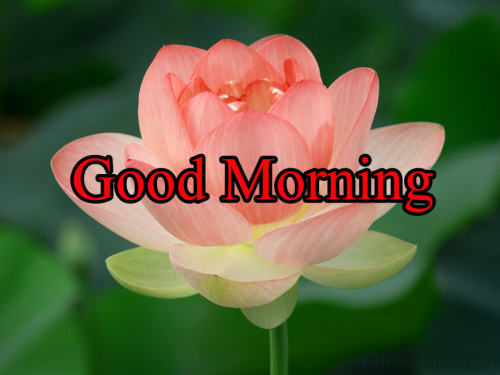 GOOD MORNING IMAGES WITH TEACHERS DAY WALLPAPER PHOTO HD